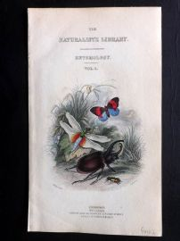 Jardine C1840 Hand Col Insect Print. Entomology Title Page. Beetle, Butterfly